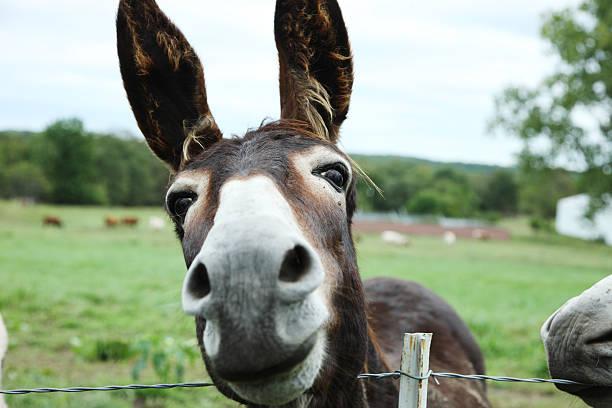 donkey take 2